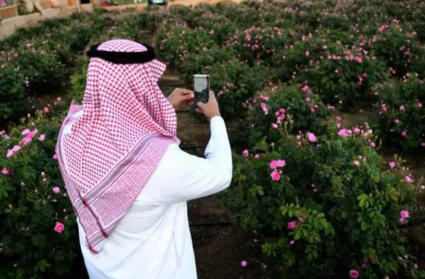 Миллион разных роз - цветущие поля в Саудовской Аравии