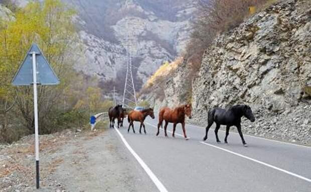 На фото: лошади на автомобильной дороге недалеко от села Дадиванк