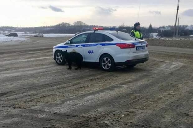 Заблудившаяся в Новокузнецке собака пришла за помощью к полиции. Фото: ГУ МВД России по Кемеровской области.