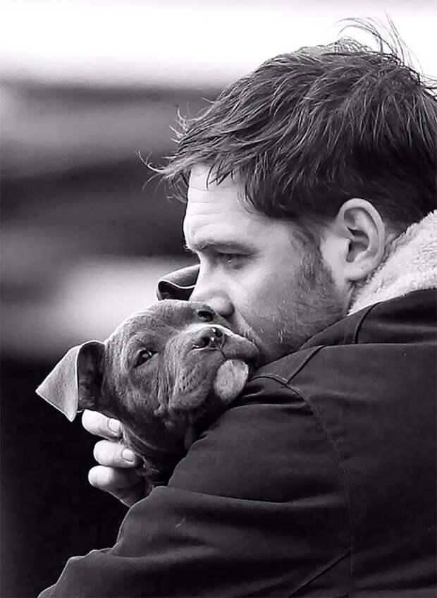 Том Харди с собаками — одна из самых милых вещей, что вы увидите сегодня Том Харди, актер, животные, кино, милота, собака, собаки, фильм