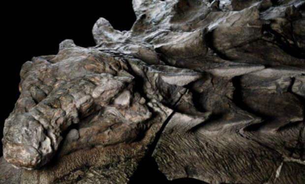 Динозавр из котлована строителей: экскаватор случайно зацепил твердое тело