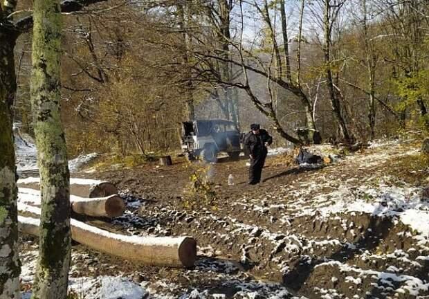 В Туапсинском районе казаки помогли задержать «черных» лесорубов