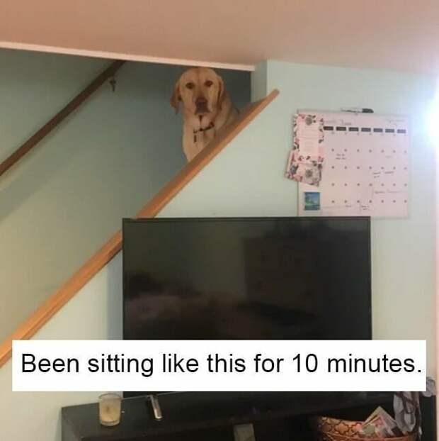 6. А этот пес смотрит на вас как на самое большое разочарование в его жизни домашние животные, домашние животные.собака, забавные собаки, пес, смешные фото, собаки, фото собак, юмор