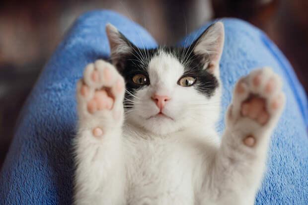 «Cамый крутой кот Великобритании» пережил три покушения