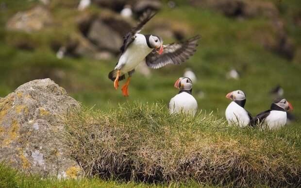 Фото Мичинес, Фарерские острова