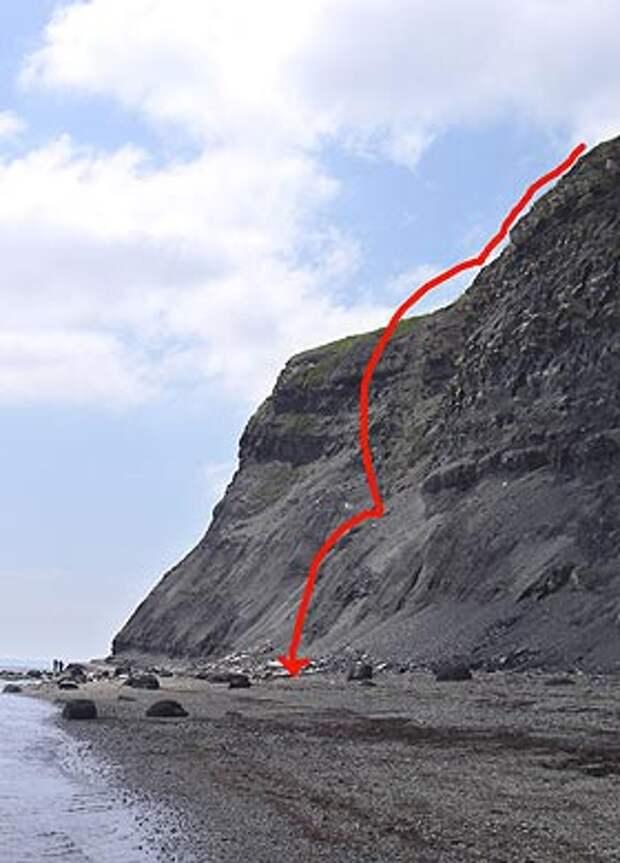 Пес Чейз выжил после падения с огромной скалы.