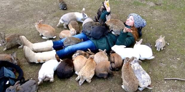 Если кролики и способны убивать, то только своей милотой.