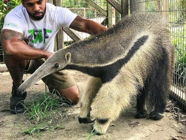 Этот современный Тарзан больше любит проводить время с животными, чем с людьми в мире, животные, красота, люди, милота, природа, тарзан
