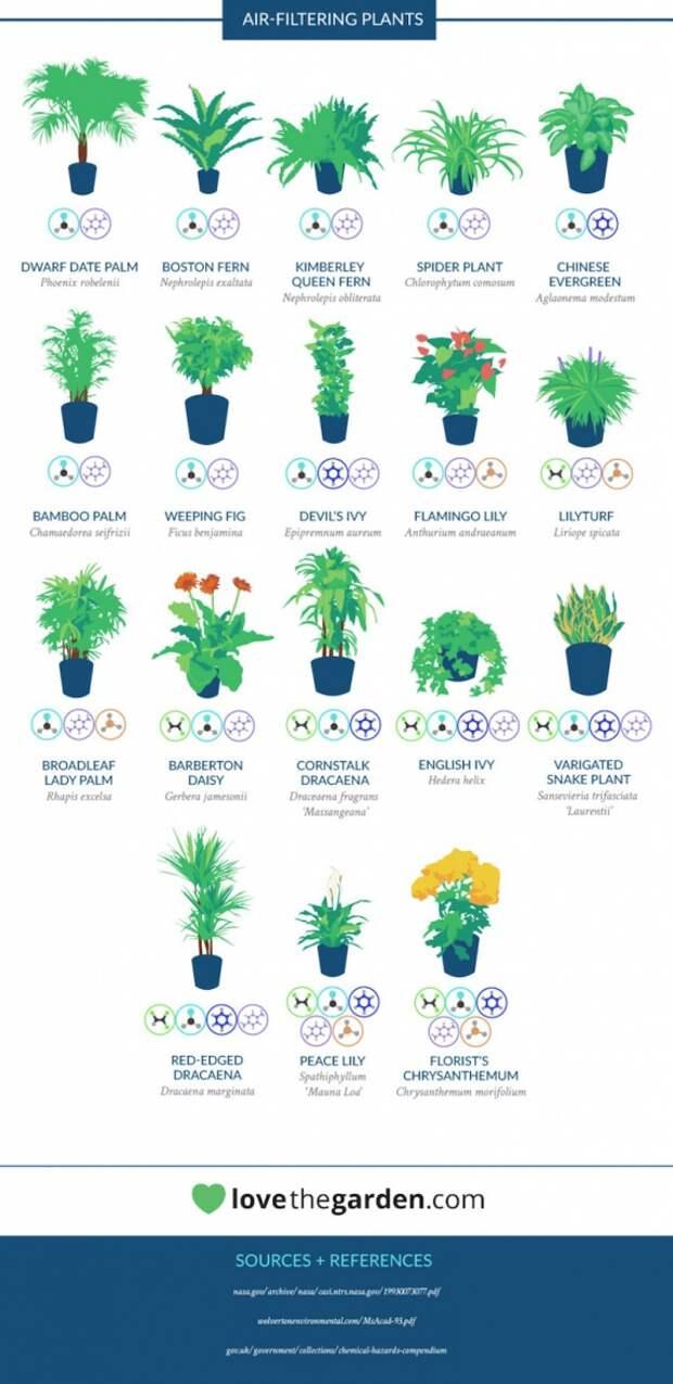растения для очистки воздуха NASA 2: Блог им. Asya: Сознательное потребление