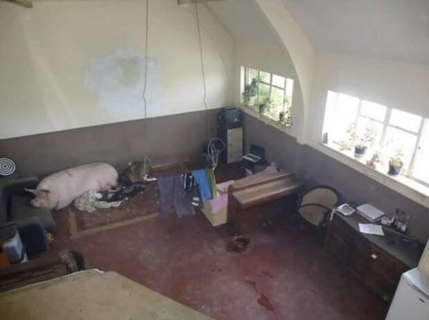 Ужасные интерьеры, поразившие даже агентов по недвижимости