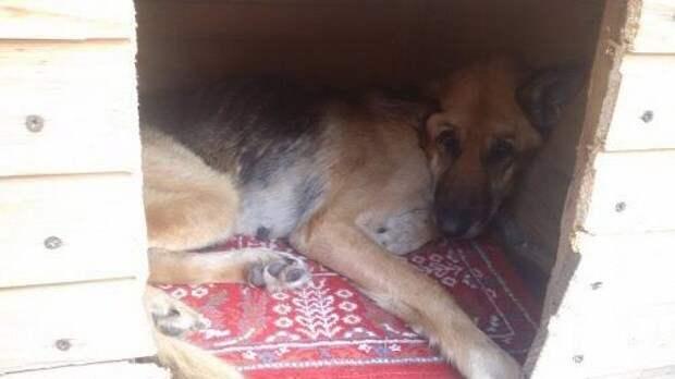 Хозяева оставили пса на базе отдыха и уехали. Она прождала их несколько месяцев