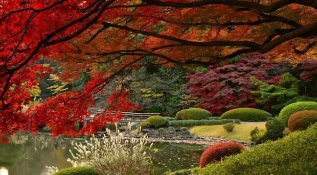 Момидзи: шестое время года в Японии