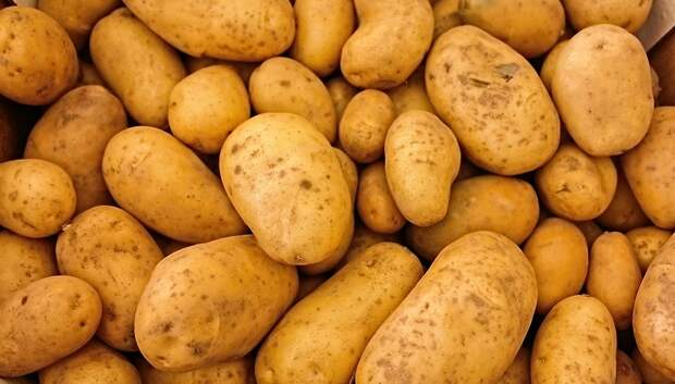 Почти 430 тыс т картофеля собрали в Подмосковье в 2019 году