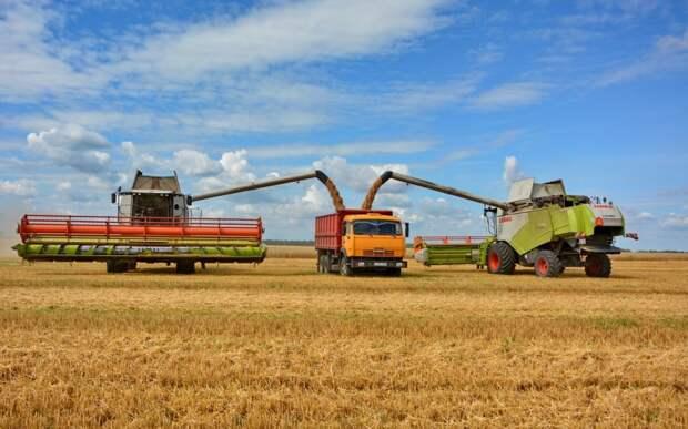 В Рязанской области намолотили свыше миллиона тонн зерна