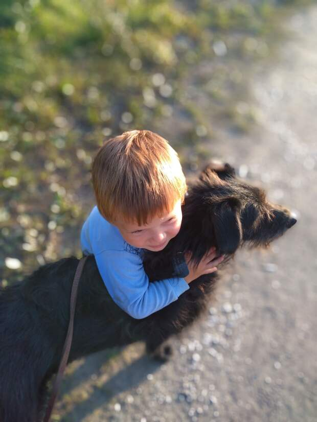 На теплотрассе жил одинокий пес, которого крепко обижали люди