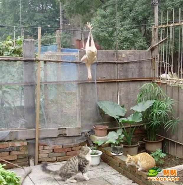 Голодный кот (9 фото)