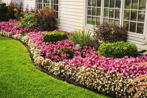 Преобразите свой сад этими цветами, которые будут радовать вас все лето