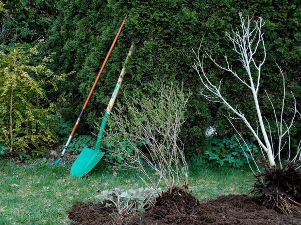 Весенние работы в саду и огороде: с чего начать?