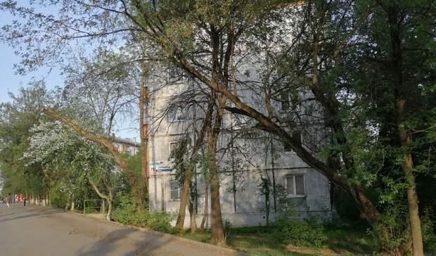 Жители Ижевска просят убрать аварийные деревья