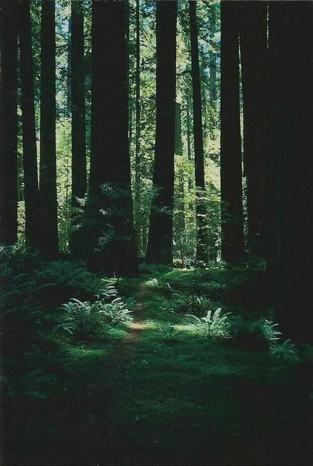 Лесные тропы хранят много тайн.  Источник: яндекс-картинки.
