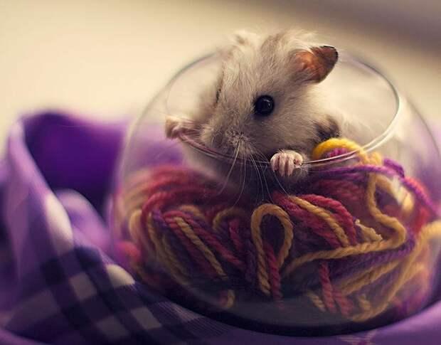 cute-hamsters-8__880