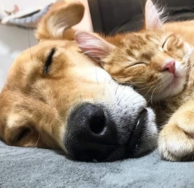 Кот и пес спят