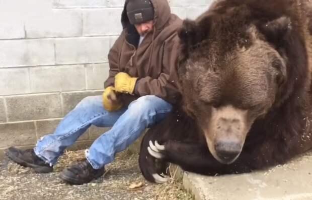Лесоруб обнял и утешил огромного медведя