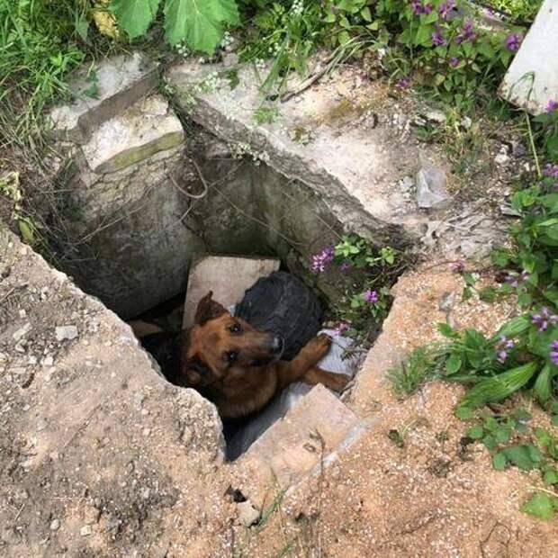 В Новороссийске собака провела больше суток в бетонной яме