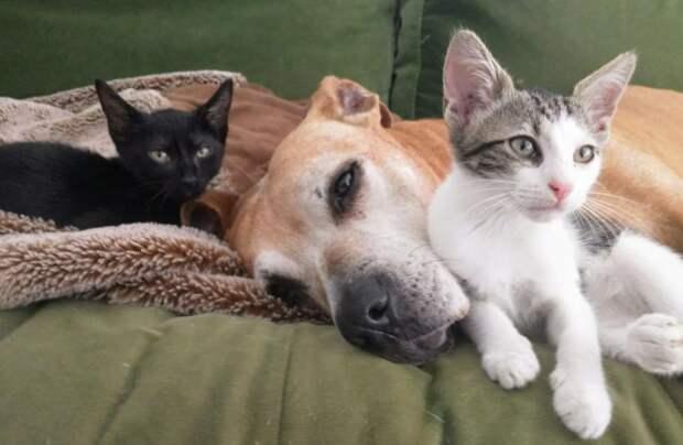 Пес и девочка смогли подружиться даже через закрытую дверь