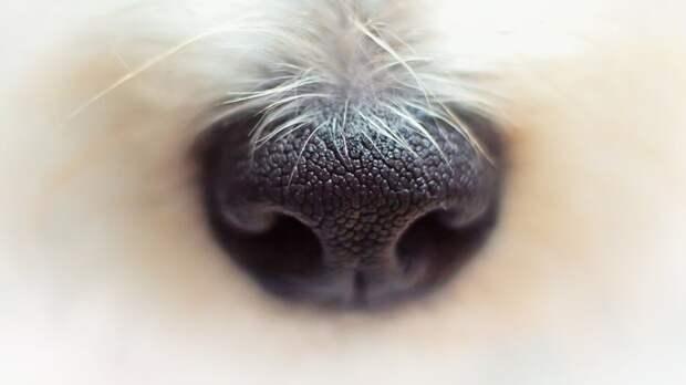 Житель Саранска жестоко избил свою собаку