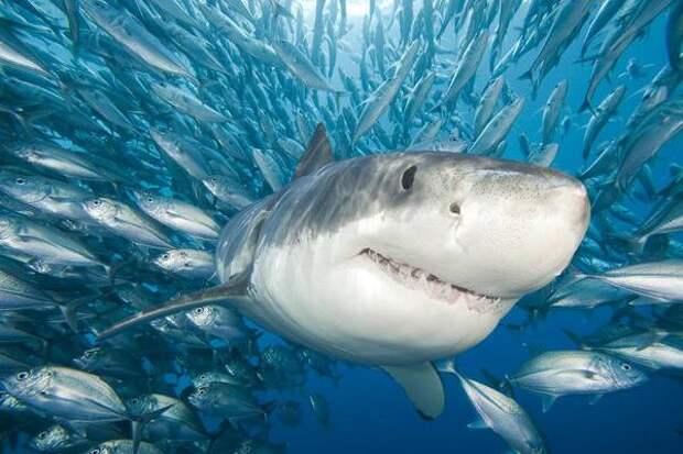 Ученые обнаружили акулу возрастом 300 миллионов лет
