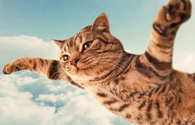 Кошка, словно в Раю. | Фото: dragallur.wordpress.com.