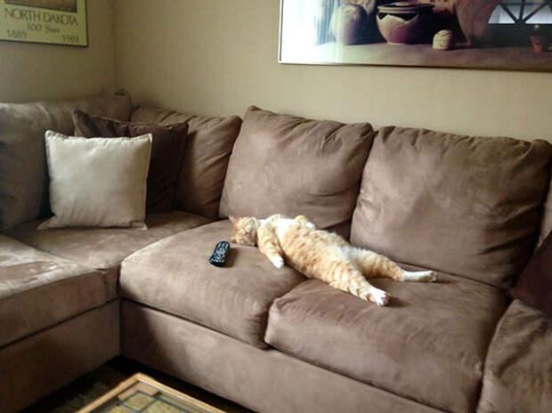 13 угарных фото котиков, которые спят в очень смешных позах