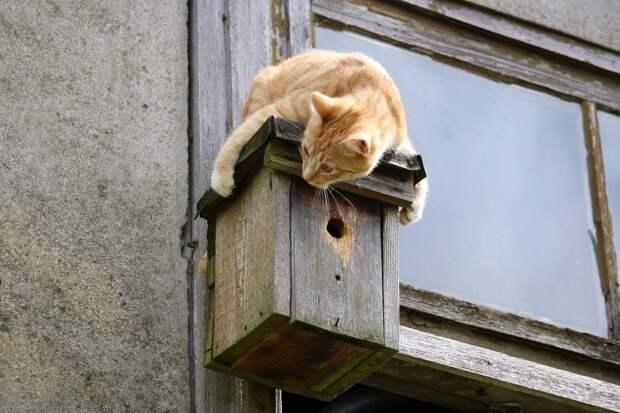 Москвичи спасли застрявшего в окне кота
