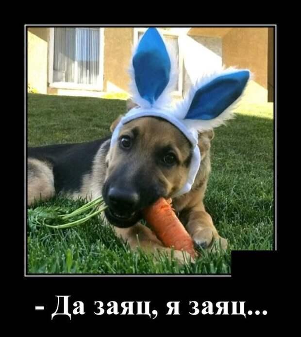 Демотиватор про собаку с ушами зайца