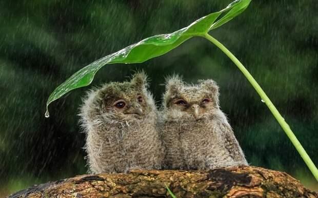 Пофиг дождь животные, коты, милота