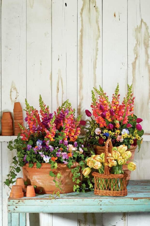 Контейнерное цветоводство. Идеи для вдохновения