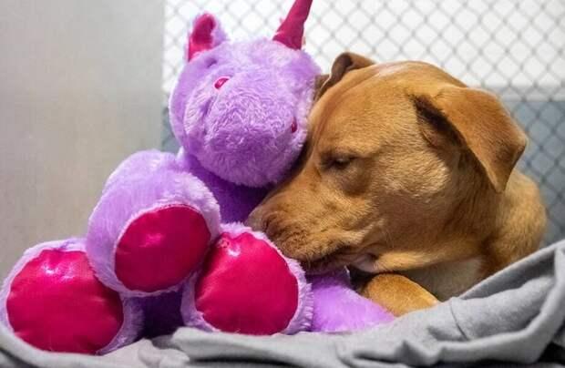 Мимишное видео: Бродячий пес попал в приют после четвертой попытки украсть единорога