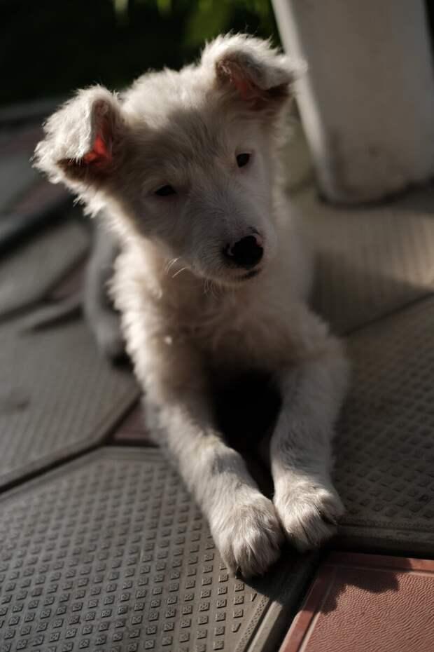 Первый месяц жизни с «ошибкой природы»: подобранным щенком