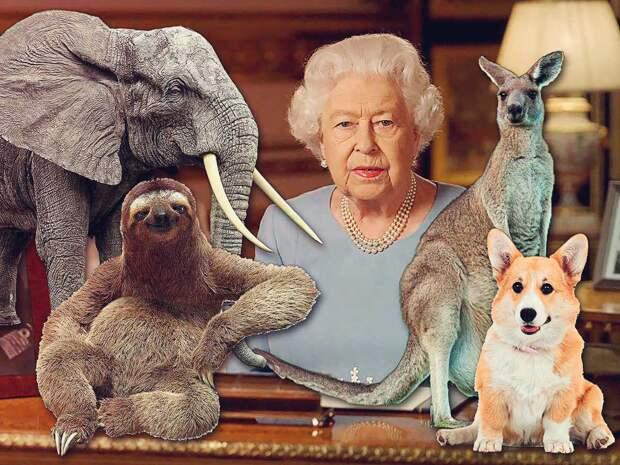 Не только корги: все питомцы Елизаветы II