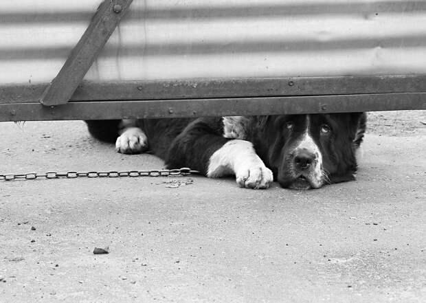 Суд разрешил собакам кусать людей, но только на ограниченной территории
