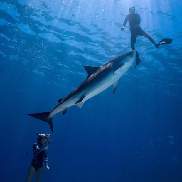 Впечатляющие подводные снимки от Хуана Олифанта