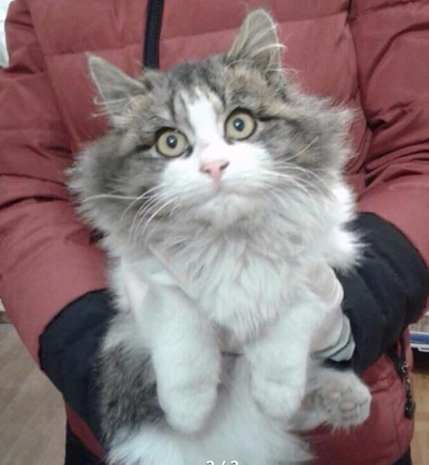 Она оказалась не в том месте: одним ударом ноги кошке отбили внутренние органы