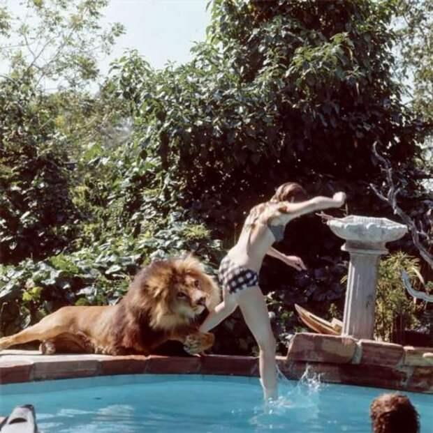 Нил — любимый лев Типпи Хедрен