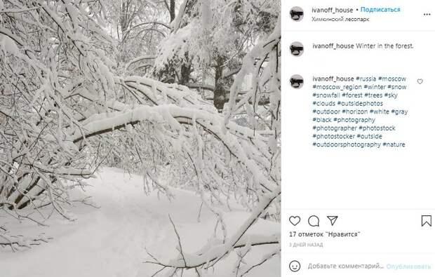 Фото дня: Химкинский лесопарк превратился в декорацию к сказке «Морозко»