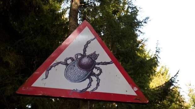 Москвичей предупреждают о нападениях клещей