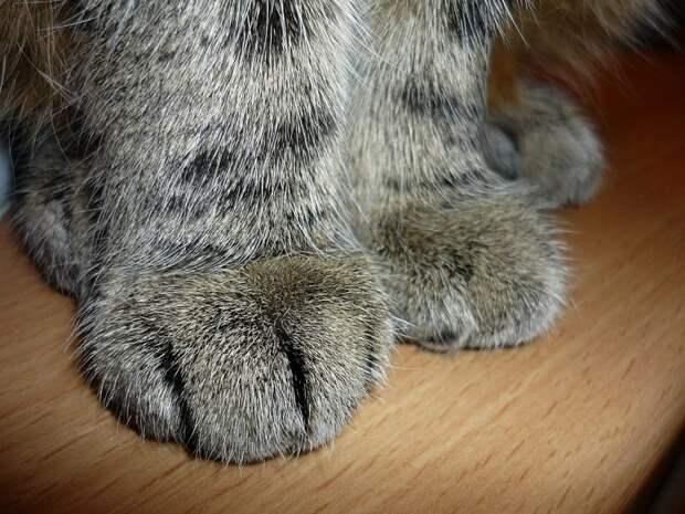 Кот на Покровской сиротливо ждет своих хозяев у консьержки