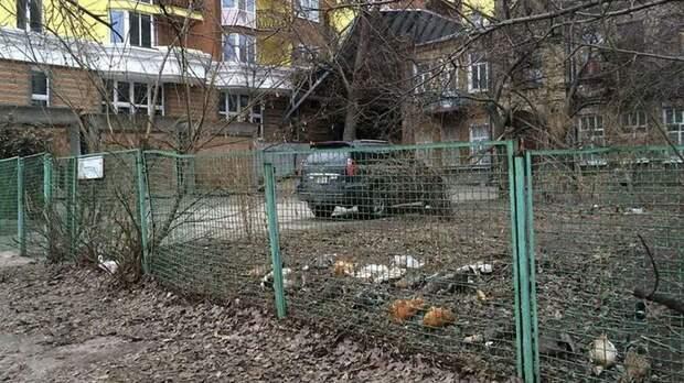 Птицы против застройки: в центре Киева снова убивают редких пернатых