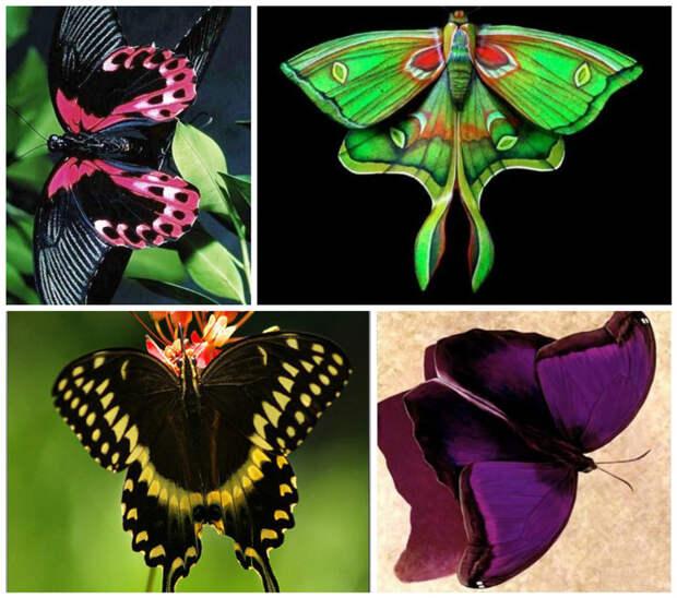 Скелет бабочки -экзоскелет - снаружи тела бабочки, интересное, красота, насекомые