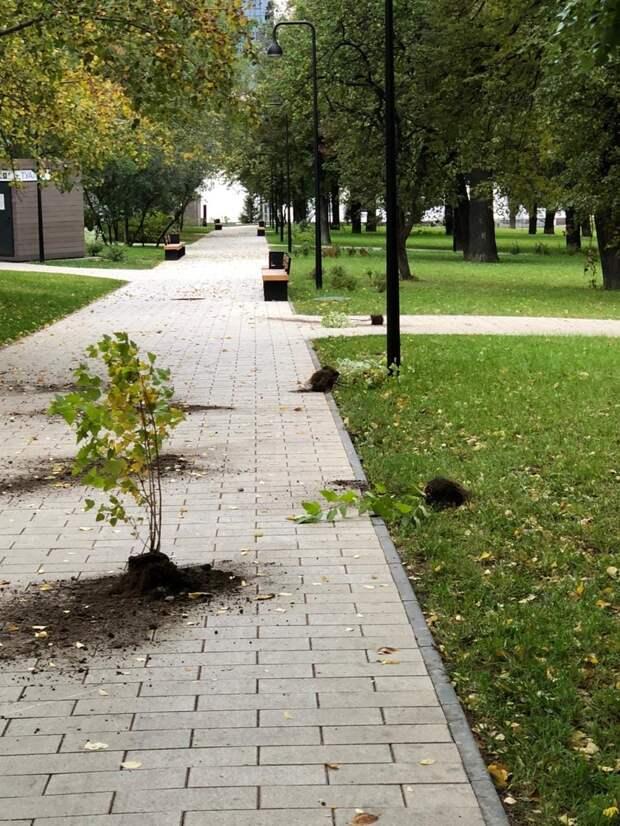 Вандалы «напали» на Центральную площадь Ижевска